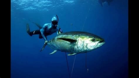 Spearfishing in the south atlantic - Ascension Island Trip
